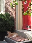 Cat on Elfreth's Alley