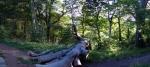 Pelaw Woods in Durham