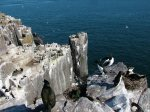 Birds on Inner Farne