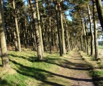 Walk to St Cuthbert's Cave