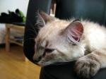 The Kitten, Faya